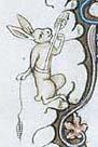 rabbit drop spin